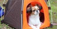 Tiendas de campaña para perros