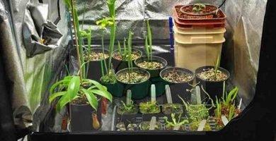 tiendas de campaña para el cultivo de plantas